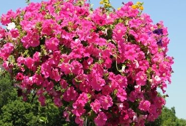SAT MAY 5: ANNUAL COMMUNITY FLOWER SALE & FARMERS MARKET OPENING